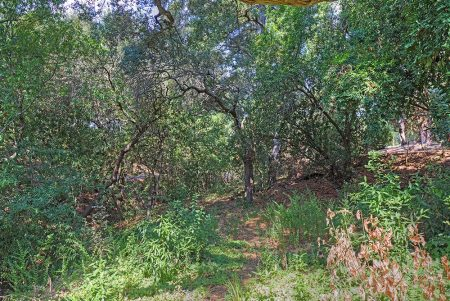 Woodside large residential lot for sale